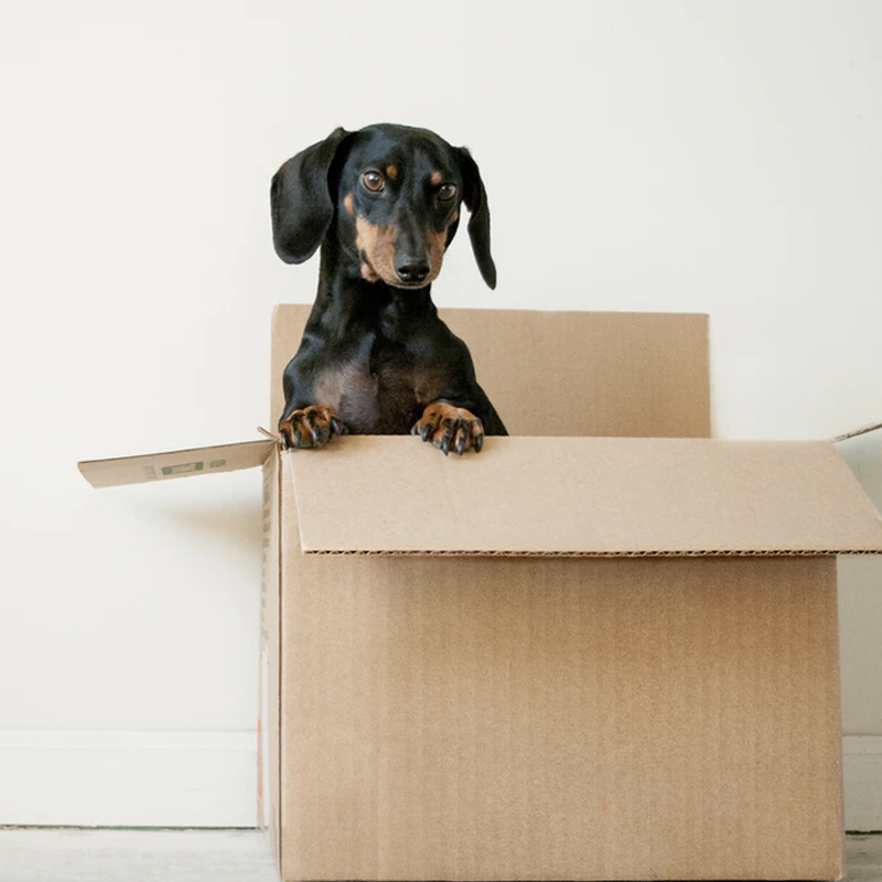 Declutter Steps to Simplify your Move